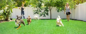 dogs playing daycare