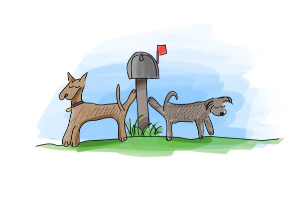 dog pee house training